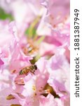 Macro Photography  Honey Bee...