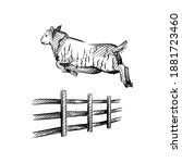 hand drawn sketch of sheep... | Shutterstock .eps vector #1881723460