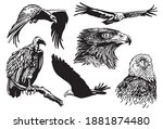 grapical set of birds isolated... | Shutterstock .eps vector #1881874480
