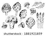 sketch of food vegetables by...   Shutterstock .eps vector #1881921859