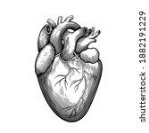 vintage anatomical engraving of ... | Shutterstock .eps vector #1882191229