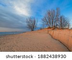 Bare Trees On Sand Dunes Of...