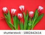 Tulips Flowers.red White Tulips ...