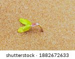 Palm Tree Grow Tropical Sand...