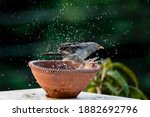 All Birds Need Water Not Only...