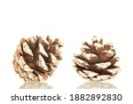 Two Pine Cones Decorated Under...