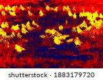 Flock Of Rooks In Scientific...