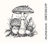 Fly Agaric Or Amanita Mushrooms ...