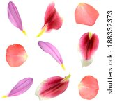 Set Of 9 Assorted Flower Petal...