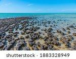 Stromatolites at Hamelin pool in Australia