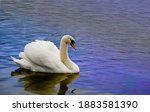 White Swan On The Water At...