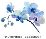 orchid isolated on white... | Shutterstock . vector #188368034