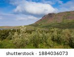 A Volcanic Field In Iceland.  A ...