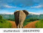 Elephants In The Tsavo East And ...