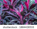 Selective Focus Ti Plant In The ...