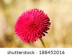 beautiful spring flower ... | Shutterstock . vector #188452016