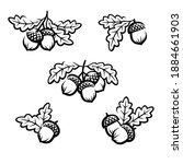 acorns set. collection of acorn ... | Shutterstock .eps vector #1884661903
