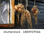 A Bunch Of Onions Hang To Dry...