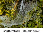 Spider Web Frozen Over The...