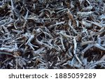 Pile Of Wood Roots. Root From...