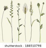 Coastal Grasses  Illustration