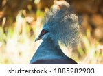 A Portrait Of A Western Crowned ...