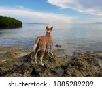 dog in front of the sea....   Shutterstock . vector #1885289209