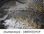 Water Bubbles In Aquaculture...