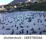 Boulder Beach Penguins  Cape...