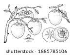 set of hachiya persimmon fruit... | Shutterstock .eps vector #1885785106