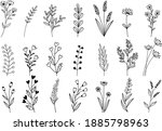 vector hand drawn flower and... | Shutterstock .eps vector #1885798963