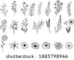 vector hand drawn flower and...   Shutterstock .eps vector #1885798966