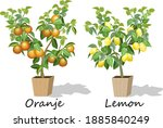 illustration with citrus trees... | Shutterstock .eps vector #1885840249