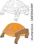 Tortoise Vector Drawing Animal...