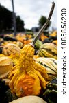 Colorfull Fall Gourds For The...