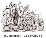 arrangement of home plants in...   Shutterstock .eps vector #1885938163