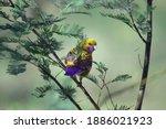 Australian Bird Crimson Rosella ...