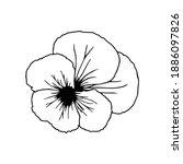 Iris Flower. Iris Means ...