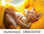 Orange Cat Baby Relax On The...