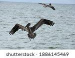 Bird Spotting At Captiva Island