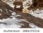 A Slavic Bear On The Top Of...