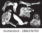 vector hand drawn set of wild... | Shutterstock .eps vector #1886196703