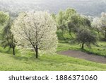 spring view with white cherry... | Shutterstock . vector #1886371060