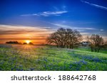 Texas Bluebonnet Spring...