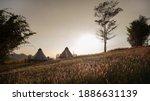 Landscape Of Pampas Grass Field ...