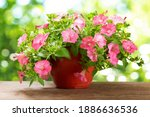 Petunias Flower In A Pot On...