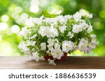 Petunias Flower In A Pot On A...