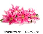 Pink Lily Isolated On White...
