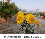 yellow hibiscus flowers with...   Shutterstock . vector #1887561289