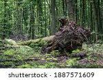 A Tree Uprooted In The Forest...